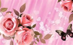 pink and roses rosas de color rosa para san valentín fondos de pantalla