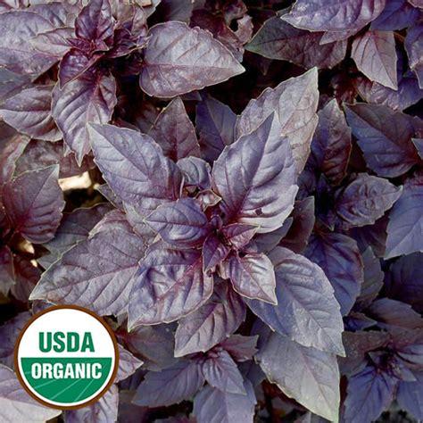 purple dark opal basil organic herb seed savers exchange