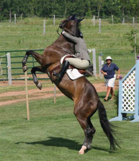 horse horses rearing stress calm nervous dangerous managing keep rider behavior vices saddle unwanted extension behaviors brown