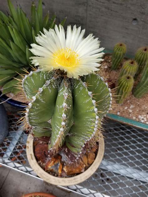 Cactus and Succulent Collection | Denver Botanic Gardens