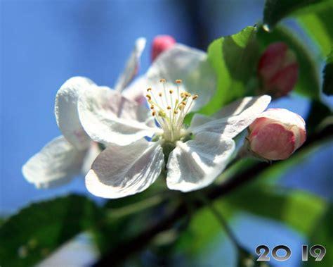 Download Spring Flourish Free Screensaver 2.0