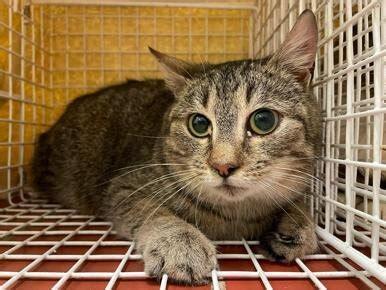 Dzīvnieki Kaķi, kaķēni: Atrasts - Pērc un Pārdod