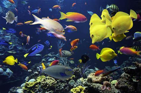 fond ecran aquarium anime types of saltwater aquariums the aquarium setup filtration and maintenance site