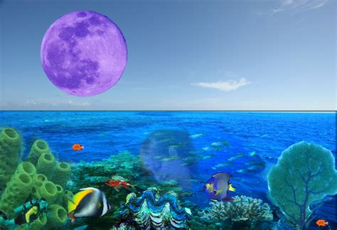 Oceandreams Modellia Model