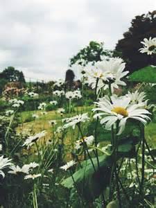 Walking in a Field Daisy