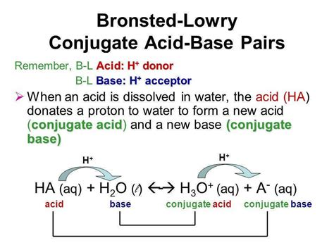 bronsted lowry acids and bases worksheet