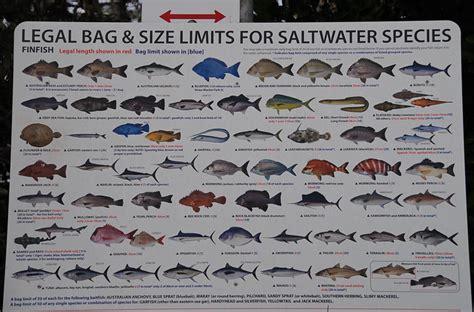 fish saltwater limits bag flickr