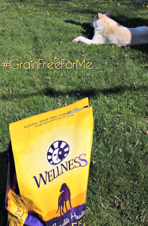 grain  dry dog food   petsmart  magical mess