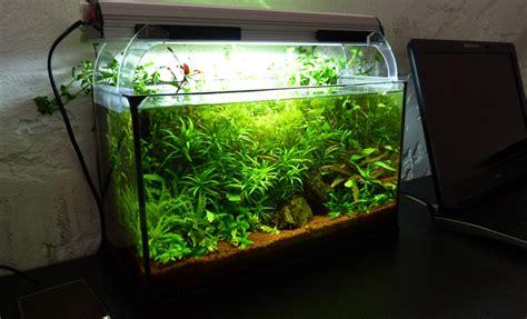 comment faire un aquarium plante aquarium naturel plant 233 20 litres anp