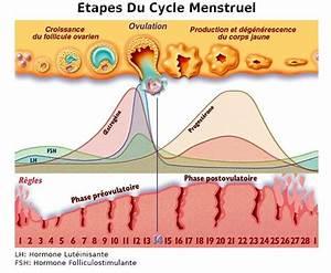 Cycle Menstruel Toutes Les Tapes De La Vie De Votre Utrus