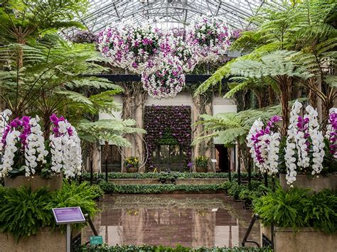 longwood gardens orchid extravaganza on view now thru
