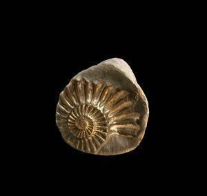 Comment Faire Du Platre : comment faire fossiles avec du pl tre de paris article ~ Dailycaller-alerts.com Idées de Décoration