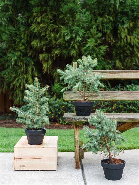 winter friendly patio plants hgtv