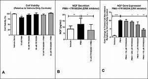 Effects Of The Erk Inhibitor Fr180204 On Pma Induction Of Ngf Gene