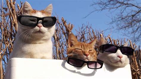 cat wear glasses  youtube
