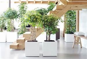 Bäume Für Drinnen : b ume f r alle pflanzenfreude ~ Michelbontemps.com Haus und Dekorationen