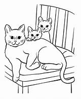 Coloring Cats Pages Popular sketch template