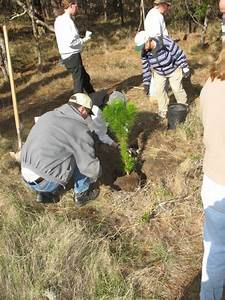 Monterey County Reforestation