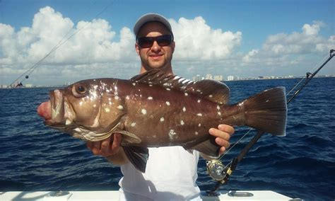 grouper deep snowy fishing dropping florida offshore crazy lauderdale sea ft caught nice shipwreck fishheadquarters happy headquarters
