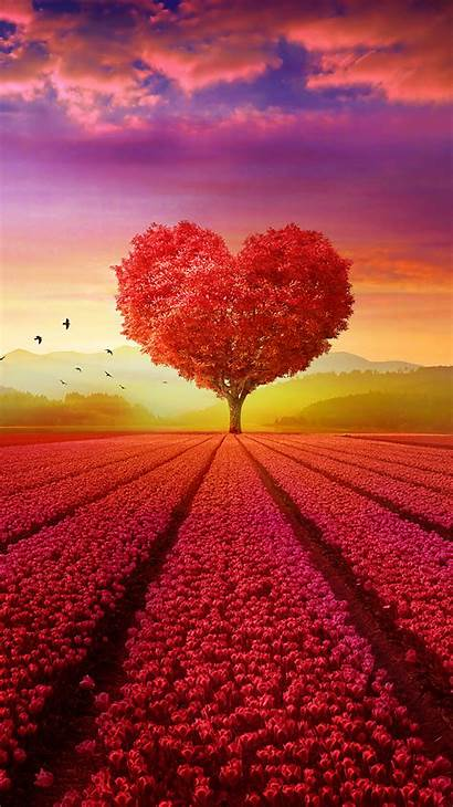 Sunset Heart Flower Tree Field Fondos Wallpapers