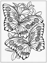 Butterfly Adult Coloring Pages Realistic sketch template