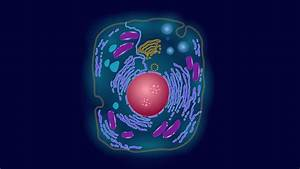 Synthetic Cell Component Expands The Code Of Life In Complex Cells