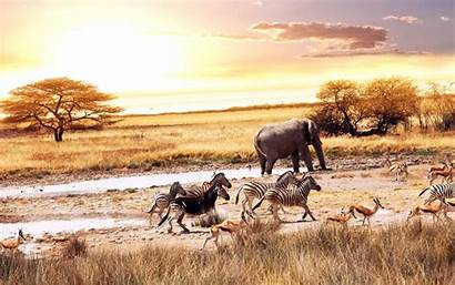 Animals African Place Watering Together Various Wallpapers
