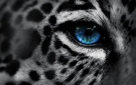 große bilder kaufen die 79 besten tiere hintergrundbilder