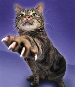 Dealing With Cats That Bite and Scratch | HowStuffWorks
