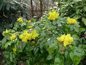 Arbuste À Feuillage Persistant : arbuste persistant paris c t jardin ~ Melissatoandfro.com Idées de Décoration