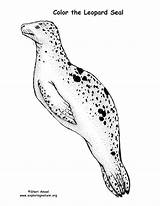Seal Leopard Coloring Sponsors Wonderful Support Please Leapard sketch template