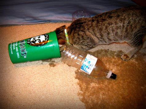 Many A Smoke Sesh Has Been Ruined By My Cat's New Found