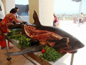 Attention Shark Lovers – Why You Should Boycott Iberostar ...