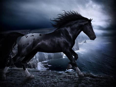 Hd Black Horse Wallpapers