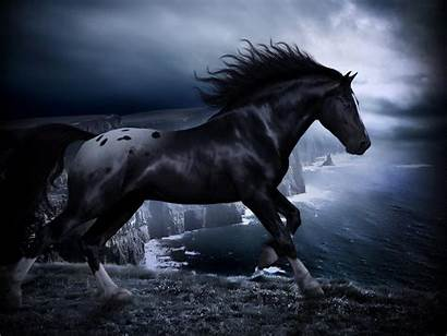 Horse Wallpapers Horses Background Stallion Dark Backgrounds