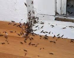ameisen in küche bekämpfung ameisen ameisenwiki