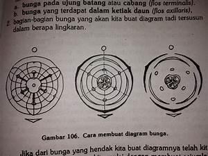 Terbaru 2015  Diagram Dan Rumus Bunga