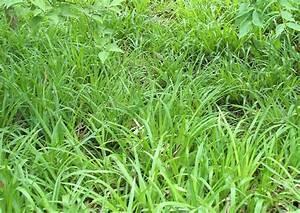 Bodendecker Statt Gras : luzula sylvatica die waldmarbel bodendecker f r trockenheit und schatten ~ Sanjose-hotels-ca.com Haus und Dekorationen