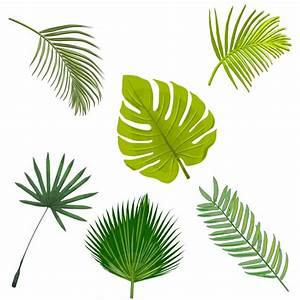 Palm Tree Leaves Collection Vector | Free Download