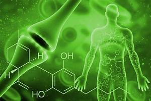 The Endocannabinoid System  Everything You Need To Know