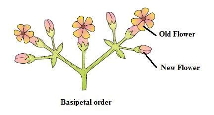 plant morphology biologyisc