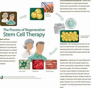 Stem Cells  Stem Cell Facts  Define Stem Cell