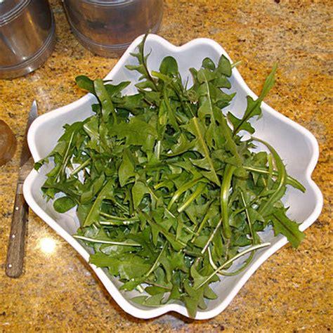 cuisiner les pissenlits mangez des pissenlits mais pas par la racine