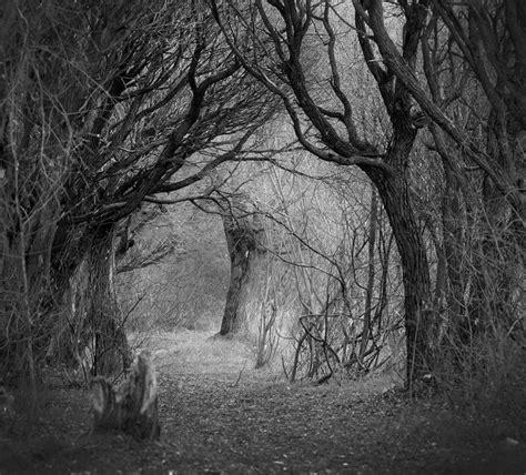 ghosts  autumn park tree autumn black  white