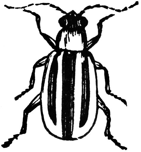 beetle clipart black and white striped cucumber beetle clipart etc