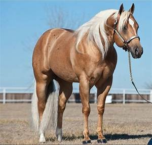 353 best horse colors - cremello, palomino, champagne ...