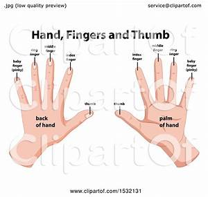 Clipart Of A Medical Diagram Of The Hands