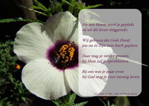 bloem gedichtje als een bloem gedichten http www gedichtensite nl