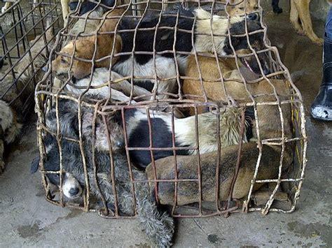 cruel dog meat trade  southeast asia
