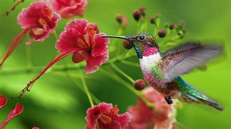 hummingbird flowers attracting hummingbirds and butterflies eliza waters
